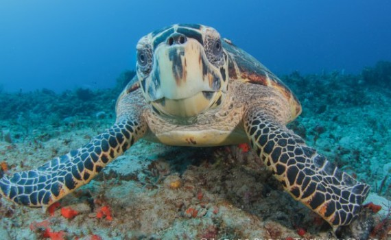 Sea Turtle Protection - Palm Beach, Florida