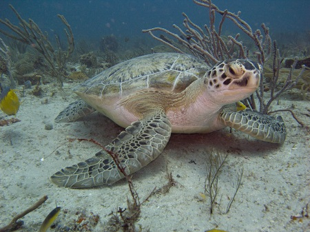 Palm Beach Sea Turtle Lighting Ordinance